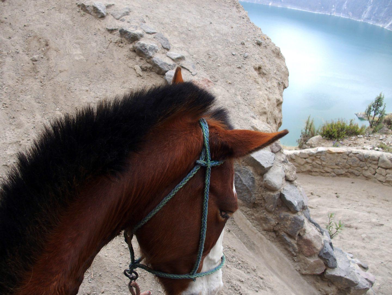 A dos de cheval dans lagune de Quilotoa Equateur