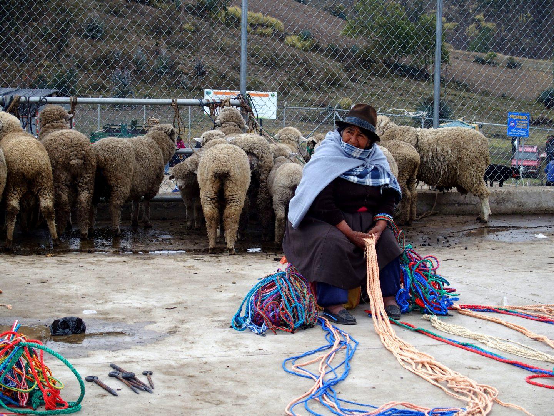 Vendeuse laine de moutons marché de Guamote Equateur