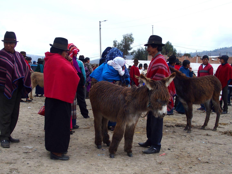 Vente d'ânes marché de Guamote Equateur