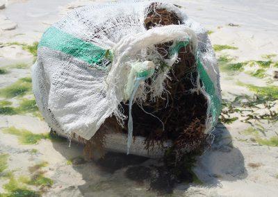 Algues Zanzibar