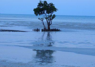 Arbre sur plage - Mozambique