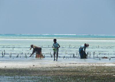 Collecte algues en famille - Zanzibar