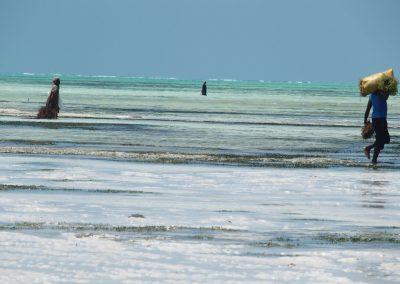 Collecte algues océan indien - Zanzibar