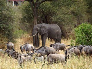 Safari dans les parcs de Ngorongoro et Tarangire