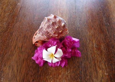 Fleurs et coquillages Season's lodge Pongwe - Zanzibar