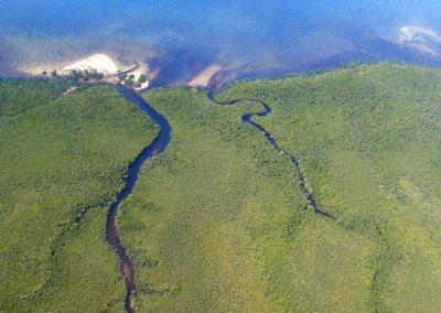 Mangroves sur la côte - Mozambique