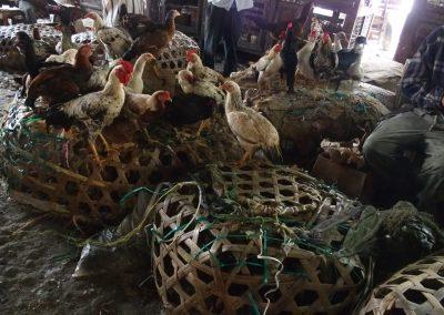 Marché aux poulets - Zanzibar