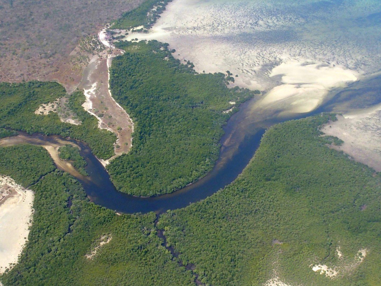 Mer et mangrove - Mozambique