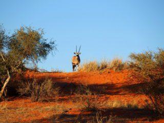 Circuit d'une semaine dans le sud de la Namibie