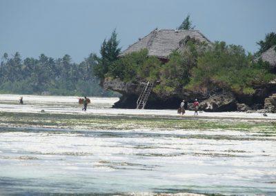 Plage devant Season's lodge Pongwe - Zanzibar