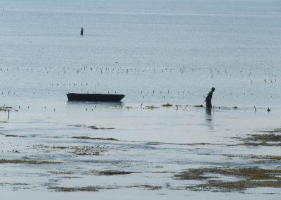 Ramasseuse d'algues - Zanzibar