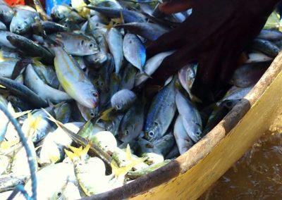 Retour de pêche - Mozambique