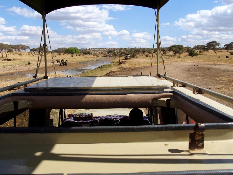 Vue depuis le 4x4 parc Tarangire Tanzanie