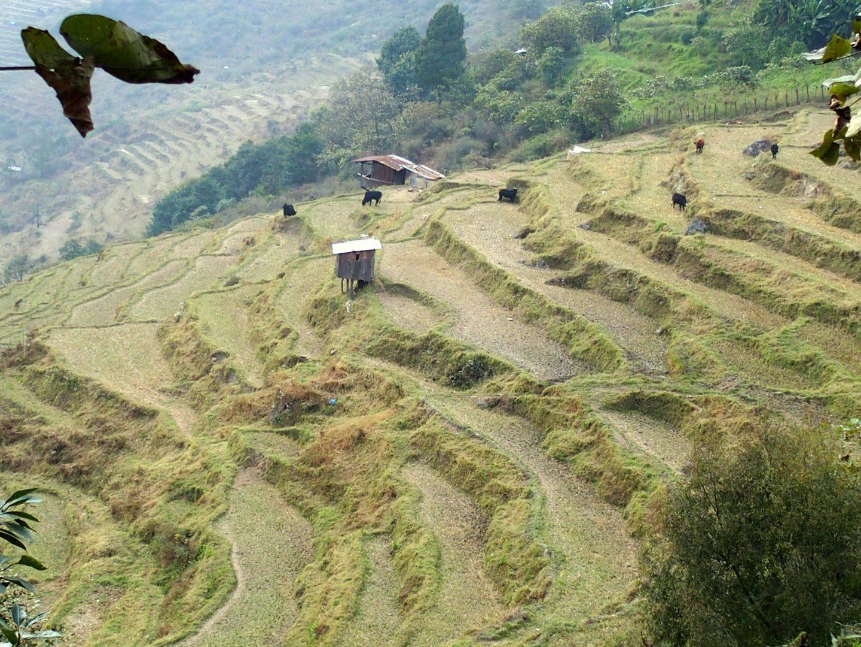 Cultures en terrasse 11 jours au Bhoutan