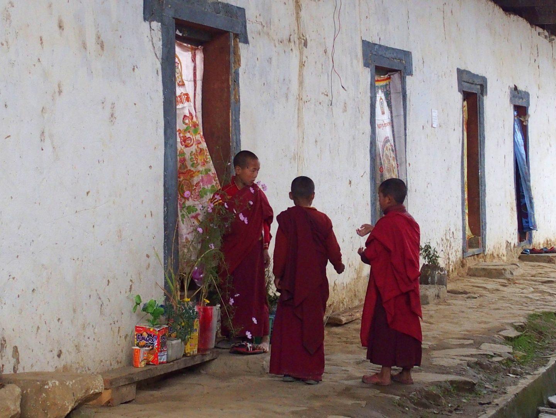 Moinillons devant leurs cellules Gangtey 11 jours au Bhoutan
