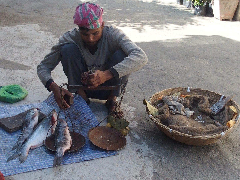 Pesée du poisson Kalimpong Inde