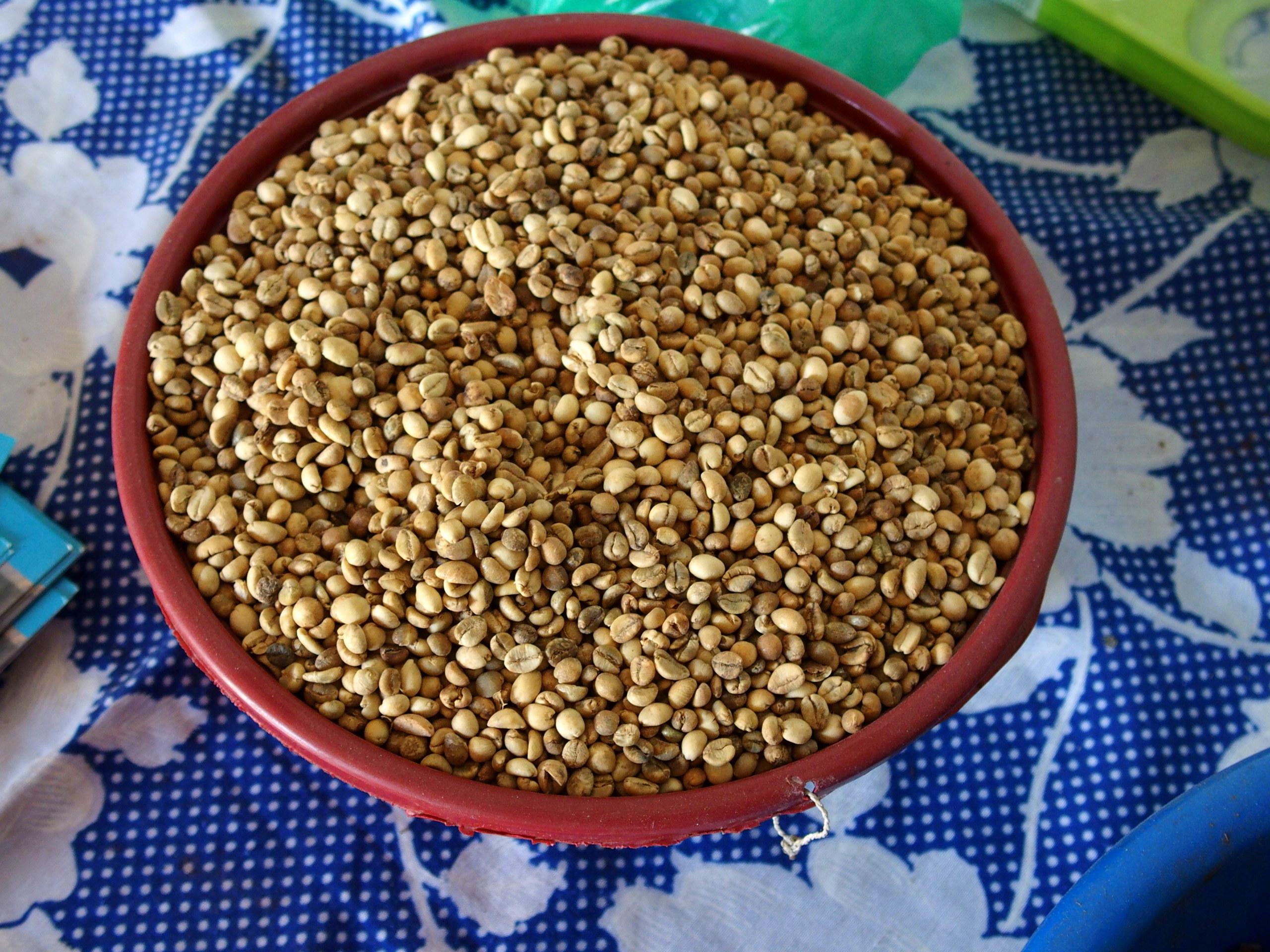 Grains de café dIbo Mozambique