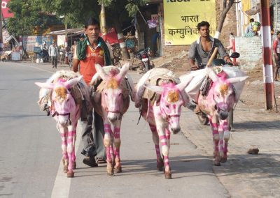 Ânes peints pour fête Inde