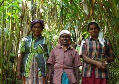 Femmes dans champs cardamone Inde
