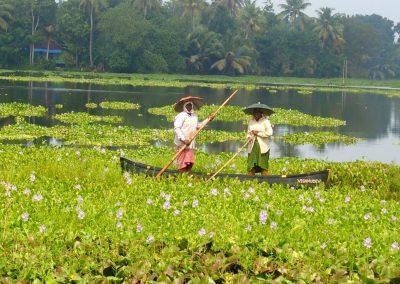 Femmes et jacinthes eau Kerala Inde