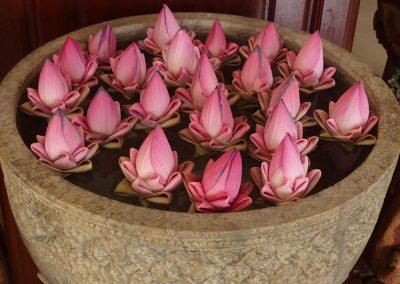 Fleurs de lotus Cambodge