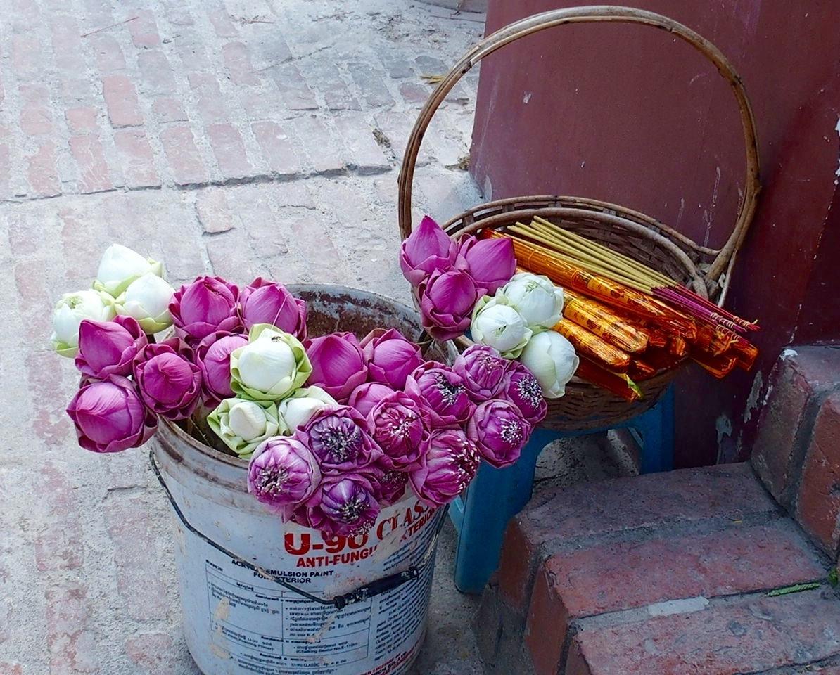 Fleurs de lotus Musée génocide Phnom Penh Cambodge
