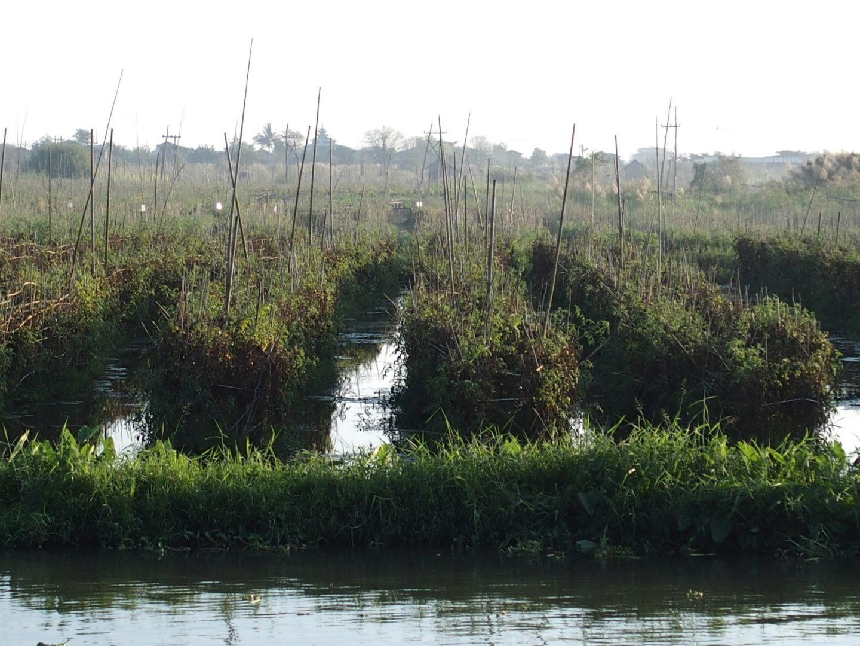 Jardin potager lac Inle Birmanie