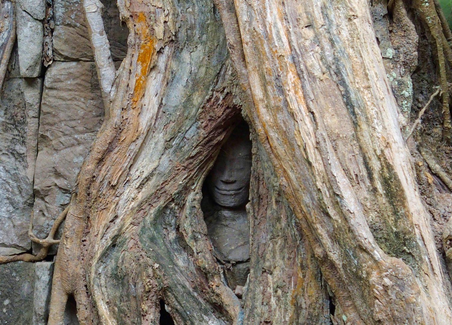 Statue dans arbre Angkor Cambodge