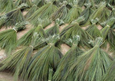 Paquets d'herbes à balais sur marché Muang Ngoi Laos