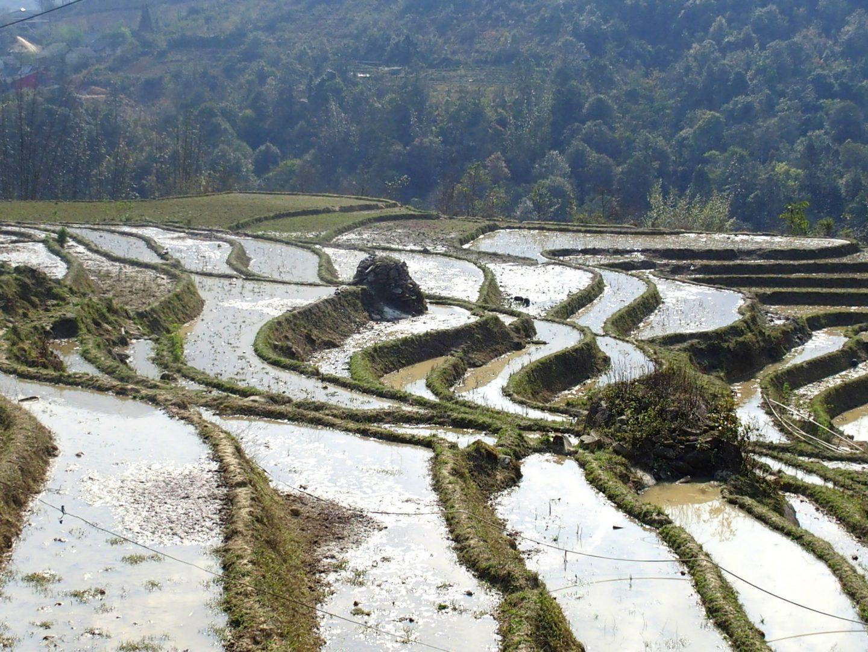 Eau sur terrasses de rizières Ta Phin Vietnam