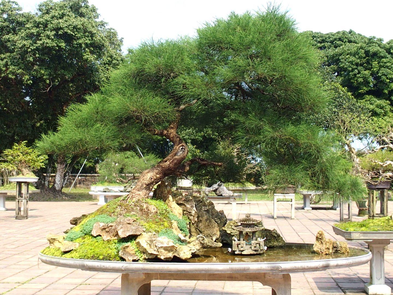 Jardin bonsai Hué Vietnam