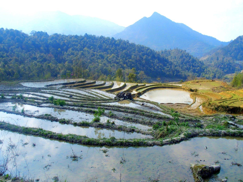 Rizières en eau Ta Phin Vietnam