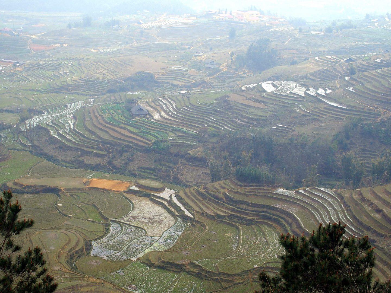 Rizières dans la vallée Ta Phin Vietnam