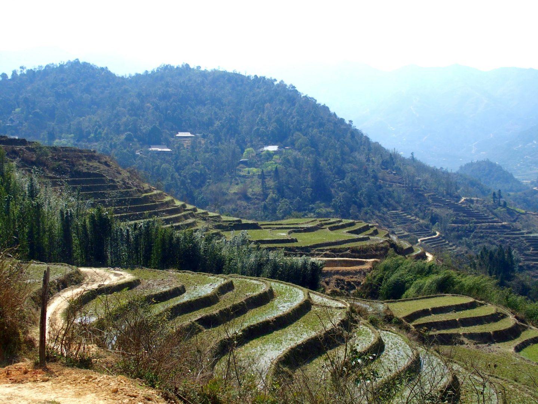 Rizières en terrasses Ta Phin Vietnam