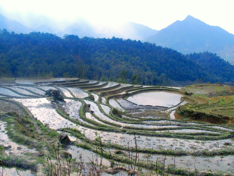 Terrasses de rizières Ta Phin Vietnam