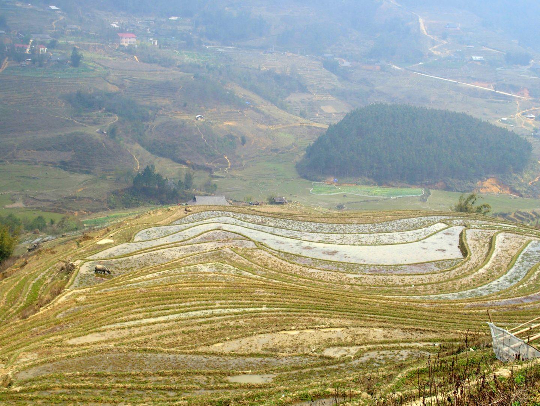 Vue sur les rizières Ta Phin Vietnam