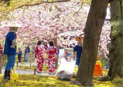 Kimonos et fleurs de cerisiers Japon