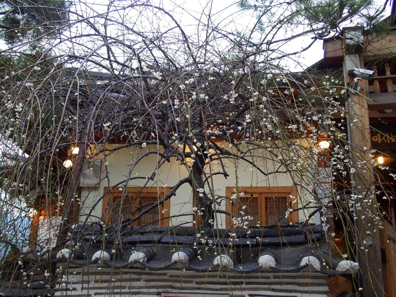 Nature et tradition hanok Seoul Corée du sud