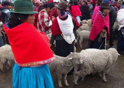 Marchandes de moutons