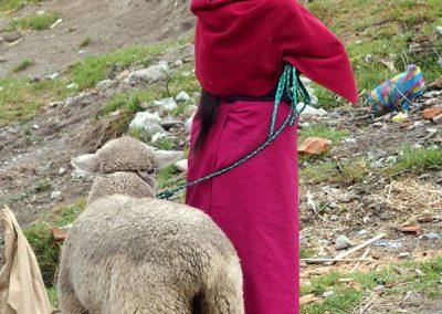 Acheteuse de moutons