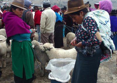 Vendeuse sur le marché des moutons