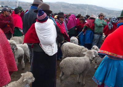 Sur le marché aux bestiaux