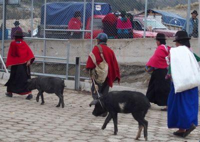 Marchandes de cochons