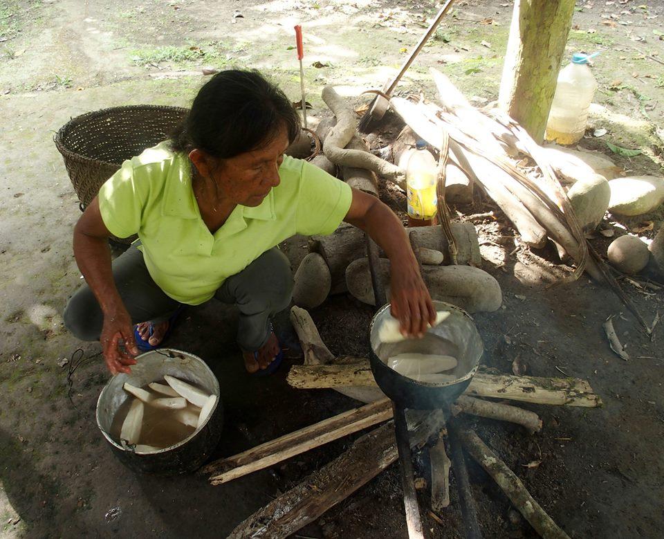 Cuisson morceaux manioc pour faire la chicha de yuca Amazonie Equateur