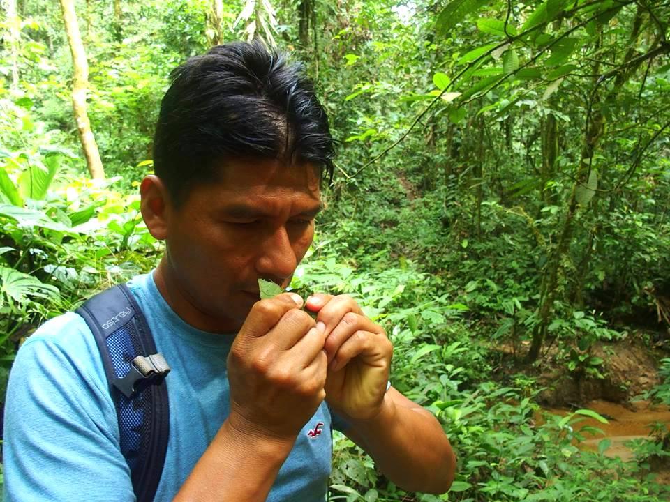 Découverte plantes avec Carlos Amazonie Equateur