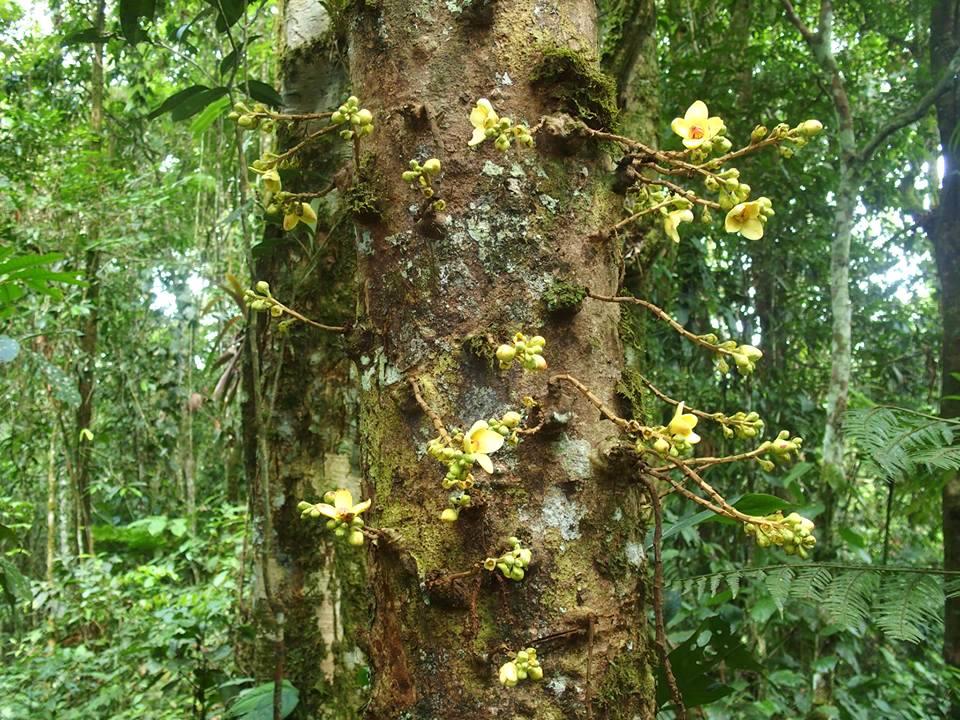 Orchidées sauvages en Amazonie Equateur