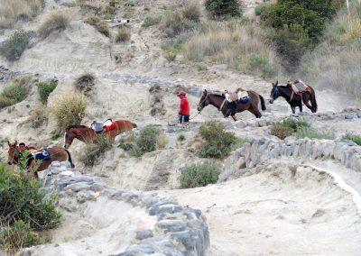 Des chevaux, en guise de taxi !
