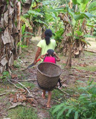 Une rencontre très piquante en Amazonie équatorienne !