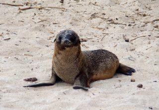 Les îles Galapagos en solo, c'est possible !