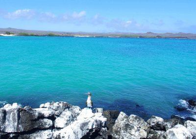Paysage enchanteur des îles Galapagos